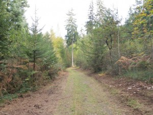 Galina Weg