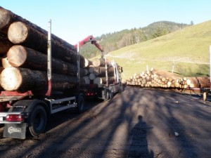 Holztransport (3)