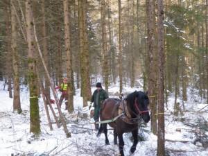 Pferdedurchforstung Vorführung (1)