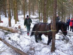 Pferdedurchforstung Vorführung (5)