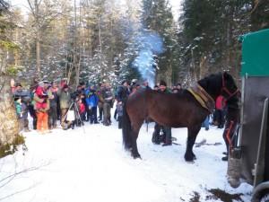 Pferdedurchforstung Vorführung (14)