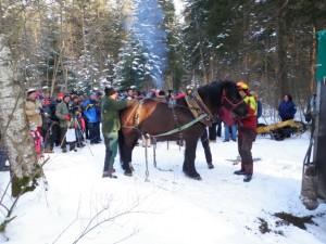 Pferdedurchforstung Vorführung (20)