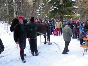 Pferdedurchforstung Vorführung (23)
