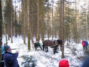 Pferdedurchforstung Vorführung (26)