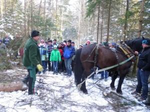 Pferdedurchforstung Vorführung (6)