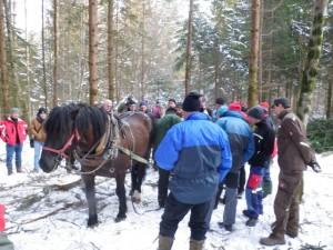 Pferdedurchforstung Vorführung (9)