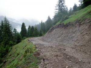 Viehtriebweg Alpila (3)