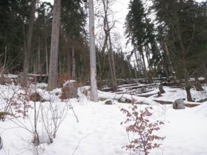 Windwurf Sturmtief Andrea am 6 Jänner Blandedon