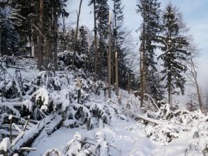 Windwurf Sturmtief Andrea am 6 Jänner Schniderasta1